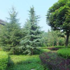 七星河濕地國家級自然保護區用戶圖片