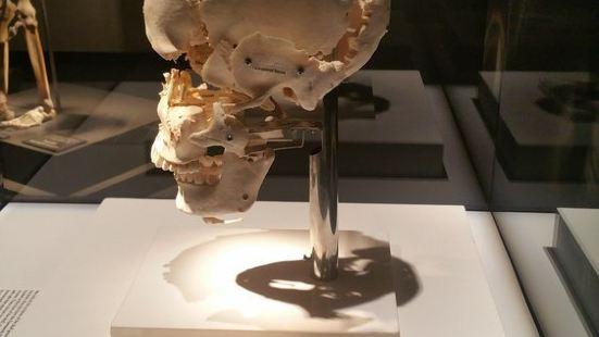 Bodies...The Exhibition - Luxor
