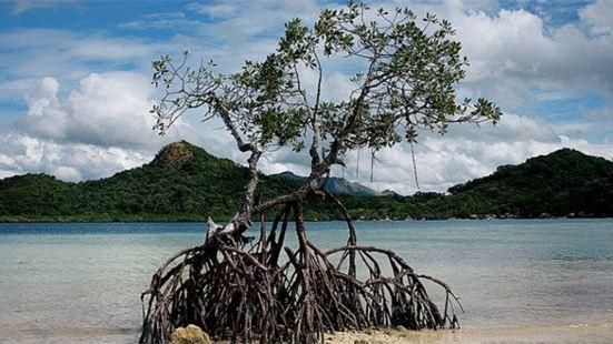 CYC Island