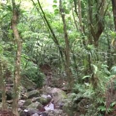 Caribbean National Forest User Photo