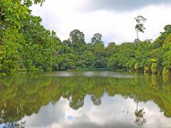 体验自然生态,山打根保护区2日游