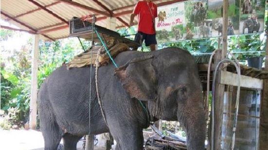 Twin Camp Chang Elephant