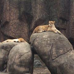 링컨파크 동물원 여행 사진