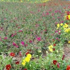 玉蜂穀養蜂園用戶圖片