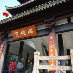 青白江櫻花節用戶圖片