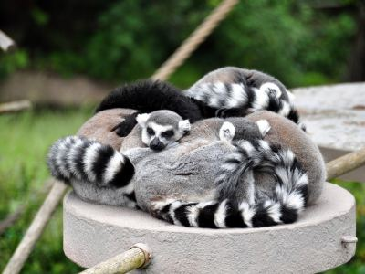 샌프란시스코 동물원