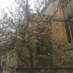 Oxford User Photo