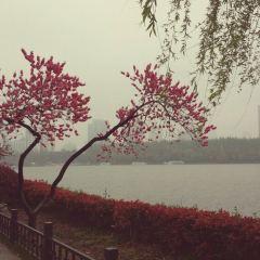 玄武湖用戶圖片