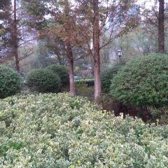 白雲森林公園用戶圖片