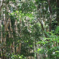 Mossy Forest用戶圖片