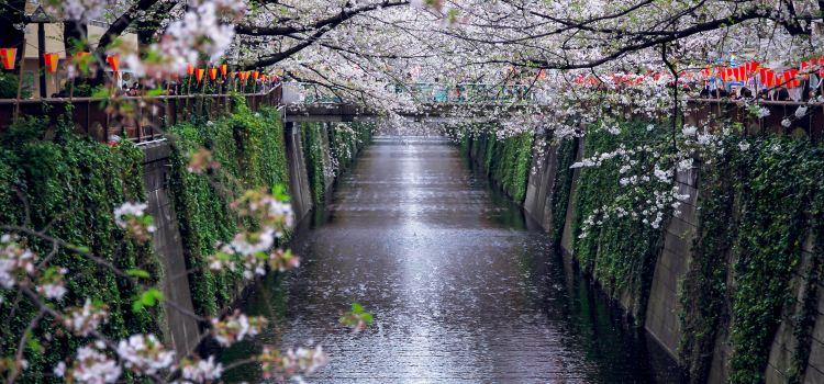 메구로가와 강3