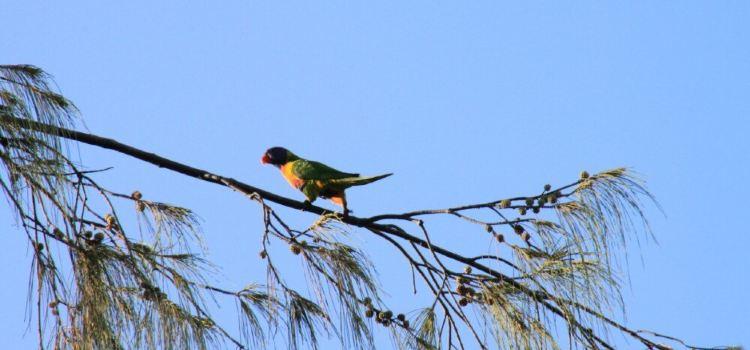 Healesville Sanctuary1