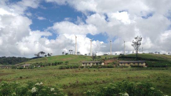 Ambewela農場