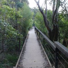 Manly Scenic Walkway User Photo