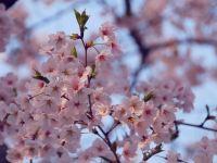 春夏秋冬,四季都是最美首爾