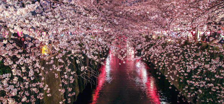 Meguro River3