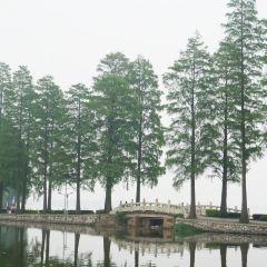 碧潭觀魚用戶圖片