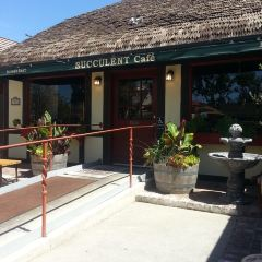 Succulent Cafe User Photo
