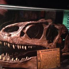 Ripley's Believe It or Not! User Photo