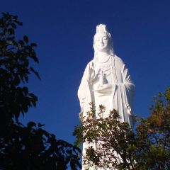 Linh Ung Pagoda User Photo