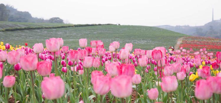 Qingxi Valley Tourist Area • Huatian Wineland Scenic Area3
