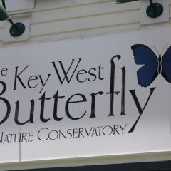 Key West Butterfly & Nature Conservatory User Photo