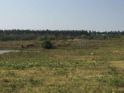 大田坡鹿保護區