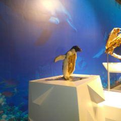 생명의 신비 박물관 여행 사진