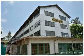 葛籣洛奇茶廠