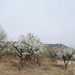 Wangziqianhong Health Preservation Resort User Photo