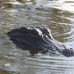 Gator Park User Photo