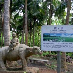Bamen Bay Greenways User Photo