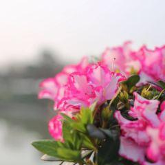 Haizhu Lake Park User Photo