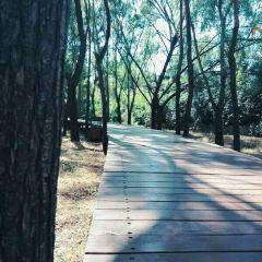 將軍山森林公園用戶圖片