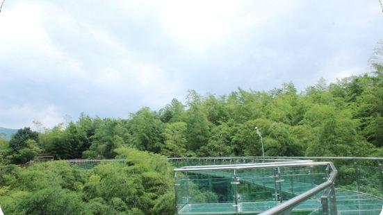 Bamboo Glass Walkway