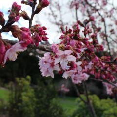 Auckland Botanic Gardens User Photo