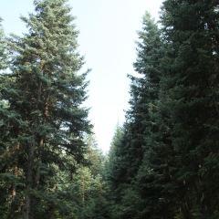 鷂子溝國家森林公園用戶圖片