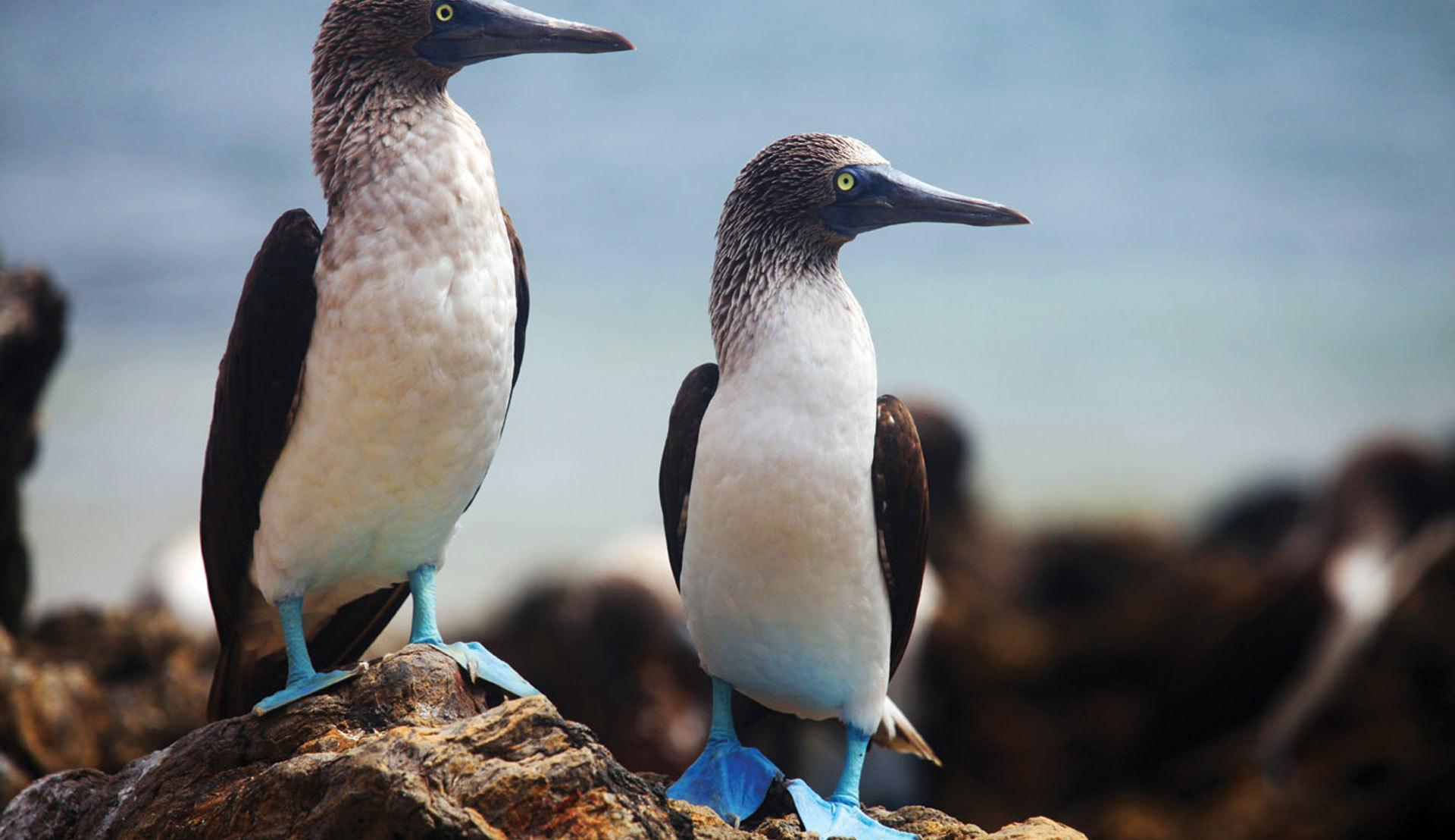 智利復活節島 厄瓜多爾加拉帕戈斯群島 玻利維亞烏尤尼 秘魯馬丘比丘21日18晚跟團游 4鉆 天空之鏡 生物博物館 送美簽 6人即發團