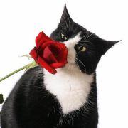 红玫瑰Rose