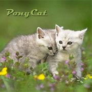 PonyCat