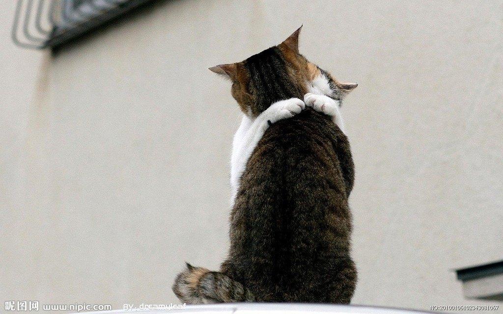 猫先生的毛线球
