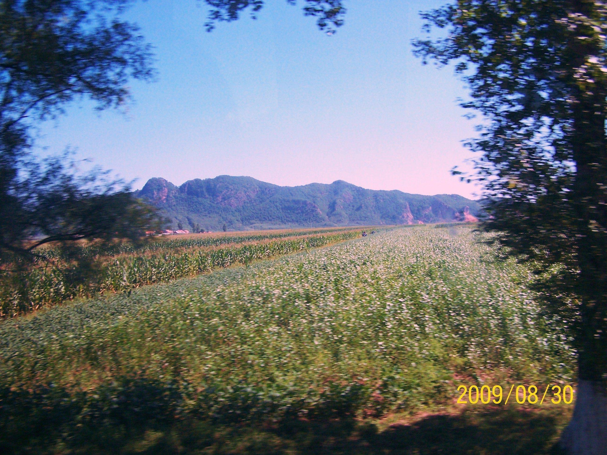 dashizi2008