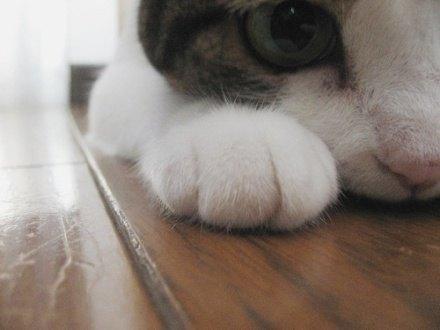 Tita猫