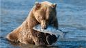 【仅此一团·阿拉斯加】银海邮轮原始阿拉斯加俄罗斯17天15晚·探险北冰洋+棕熊捕鱼+水上飞机+霍尔盖特冰川+熊乡探索之旅+海上野生动物保护区+楚科塔古老文化