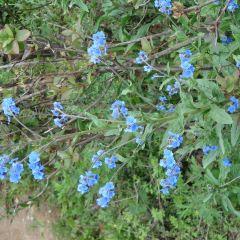 Shandianhe Scenic Garden User Photo