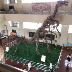 Shandong Tianyu Museum of Natural History User Photo