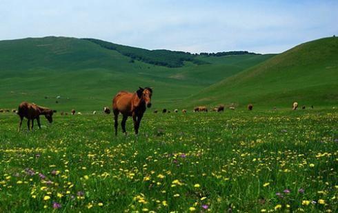張北中都草原