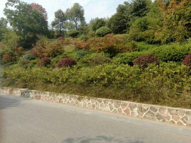 紫蓬山國家森林公園