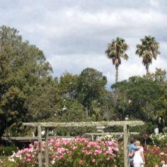 帕內爾玫瑰花園 用戶圖片