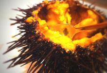 大连美食图片-海胆